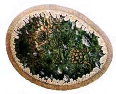 Желудок апатозавра