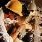 Череп крупного аллозавра