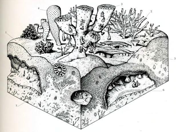 Животные кембрия