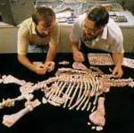 Остатки плезиозавра