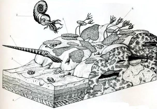 Животные ордовикского периода