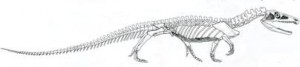 Скелет протерозуха