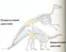 Птицетазовые и ящеротазовые динозавры