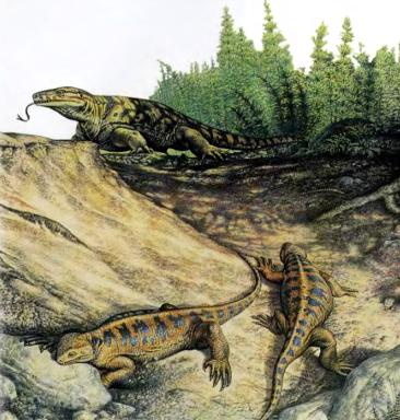 варанозавр, казеи