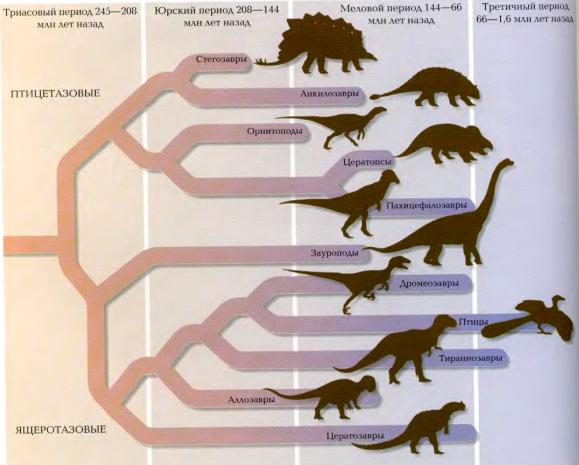 Группы динозавров