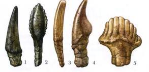 Зубы динозавров для жевания