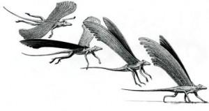 Птицы динозавры