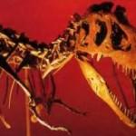 Скелет тарбозавра