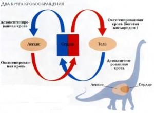 Сердце динозавров