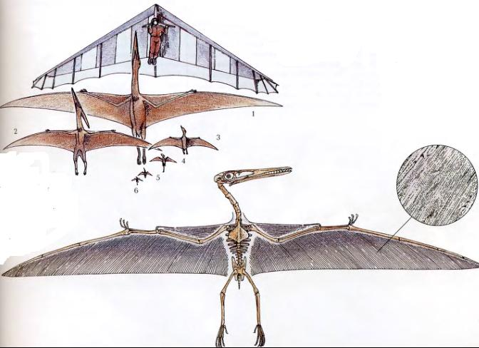 Крылья птерозавров
