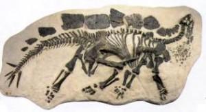 Остатки стегозавра