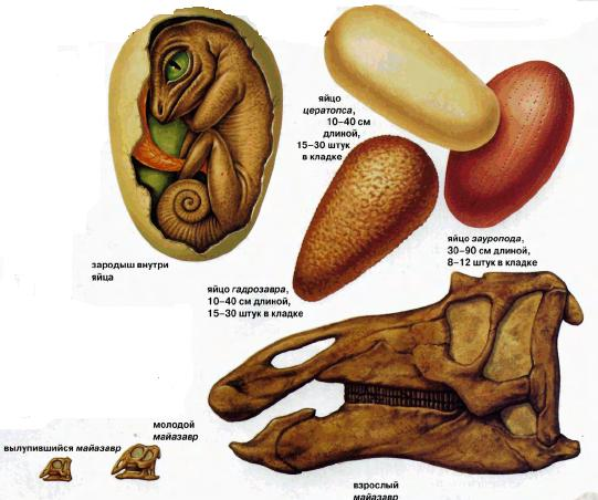 Рождение и смерть динозавра