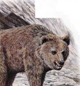 Европейский пещерный медведь