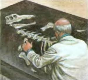 Изучение ископаемых останков