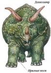 Прямые ноги - динозавры