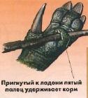 Пригнутый к ладони пятый палец удерживает корм