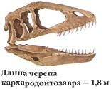 Череп кархародонтозавра