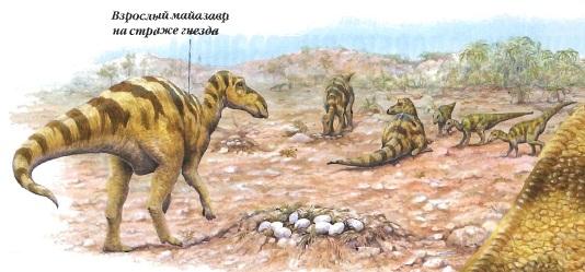Взрослый майазавр на страже гнезда