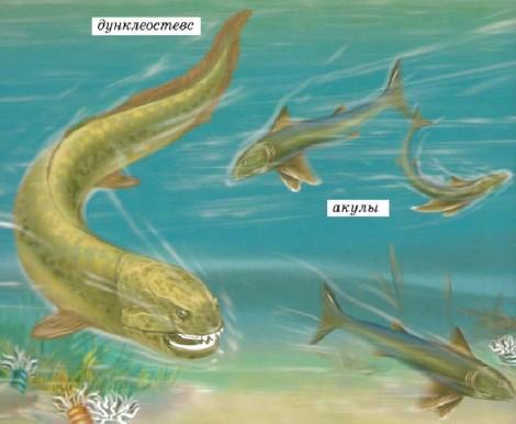 Панцирные рыбы с настоящими челюстями