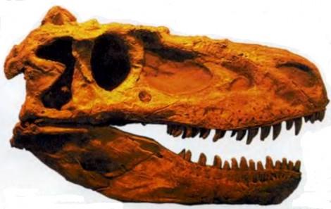 Зубы динозавров