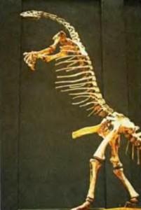 Скелет камптозавра