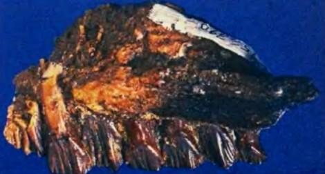 Зубы атлоскопкозавра