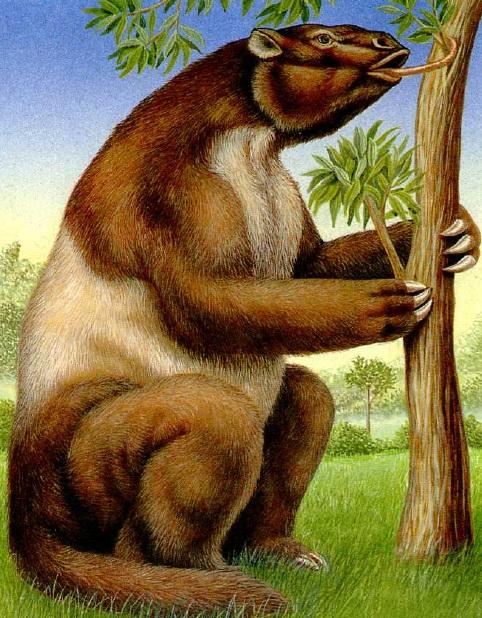 Prehistoric sloth size