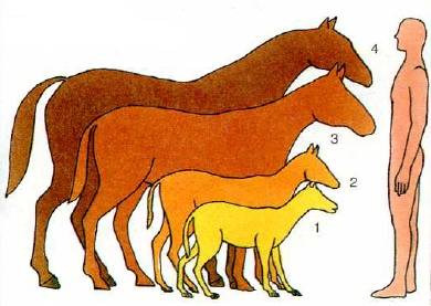 Эволюция лошадиных размеров