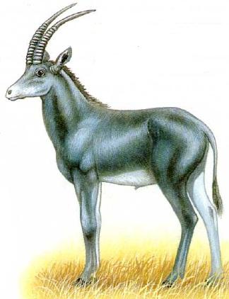 Голубая лошадиная антилопа