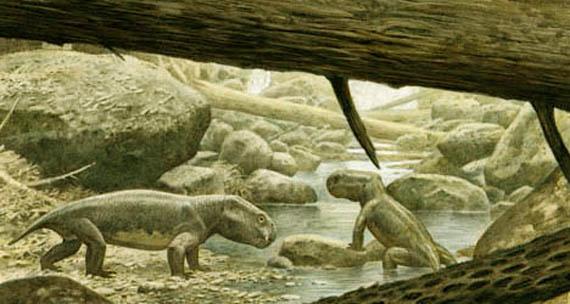 Дицинодонты (Dicynodontia Owen, 1859)