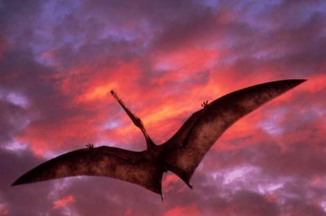 Величайшим из птерозавров был Гацероптерикс устрашающий, найден в Румынии