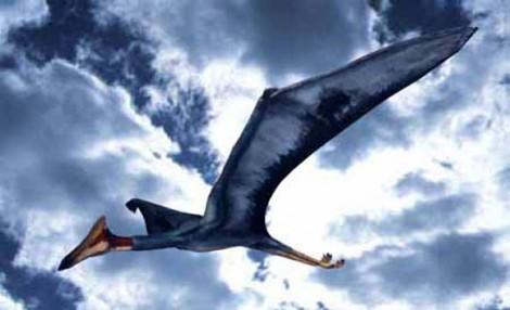 Едва ли не самым большим из всех летающих ящеров был Кетцалькоатль Нортропа