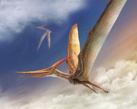 Птеранодон - самый распространенный птерозавры позднего мела Северной Америки