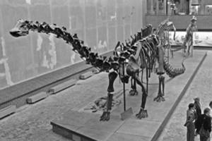 Скелет динозавров