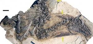 Перья динозавров